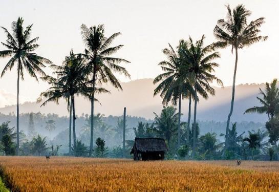 Đến Bali để