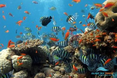 KHÁM PHÁ HÒN BẢY CẠNH (Câu cá, lặn biển ngắm san hô)